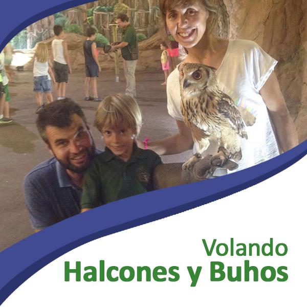 Volando halcones y búhos