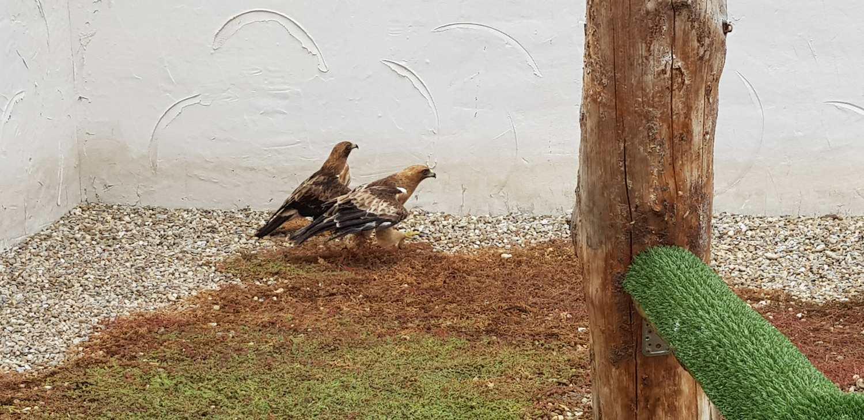 Investigación y conservación de aves Tierra Rapaz