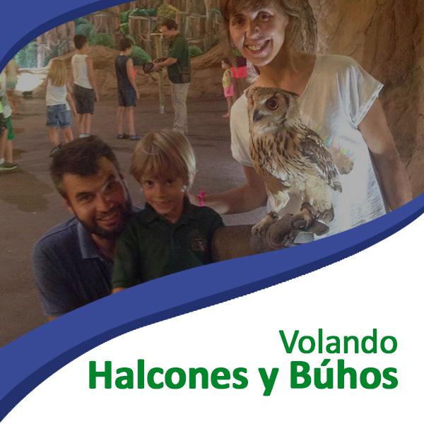 Voldando Halcones y búhos Tierra Rapaz