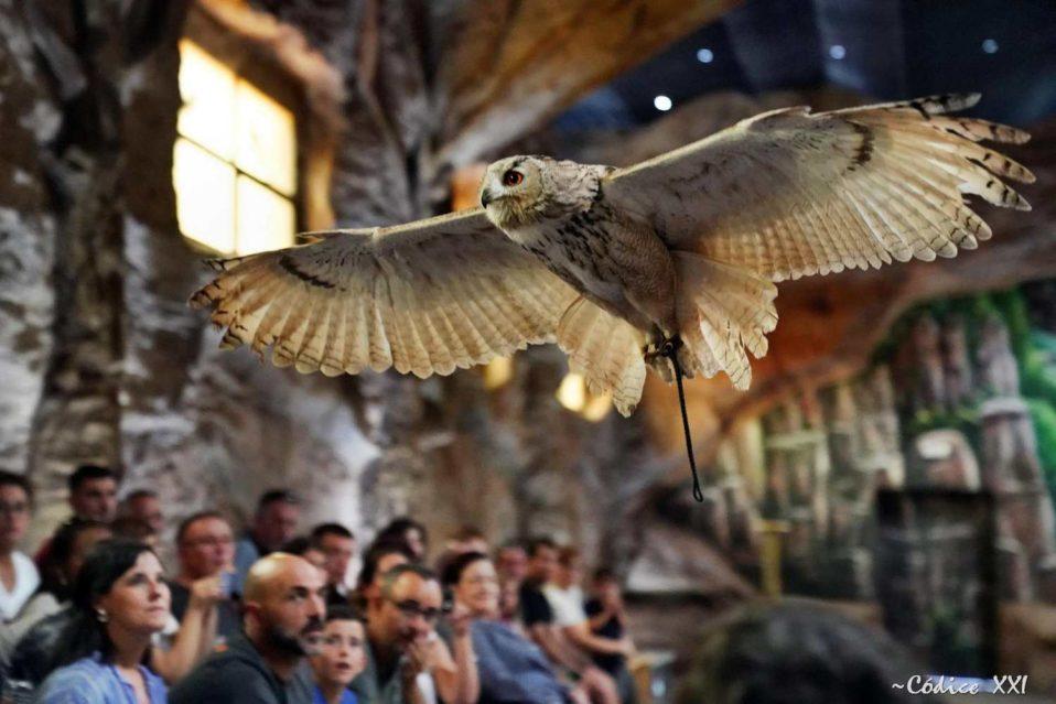 NOCTURNAL BIRDS OF PREY
