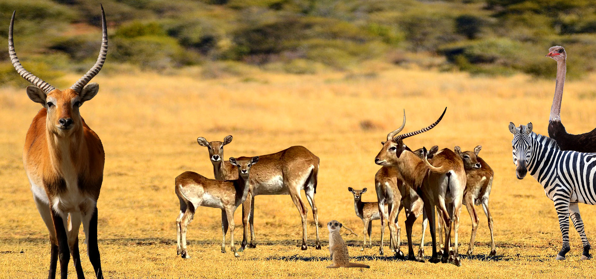 Reserva Africana